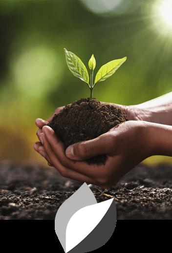 Mãos em forma de concha segurando terra com uma planta pequena.